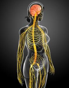 Åndedræt og nervesystem